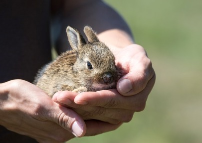rabbit-913550_640