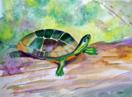Tadeo-Turtle-web-ready