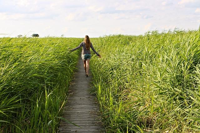 high-grass-1504278_640